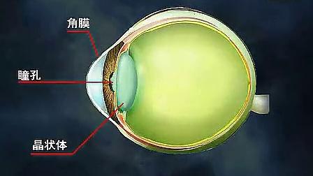眼睛的结构与保健_标清