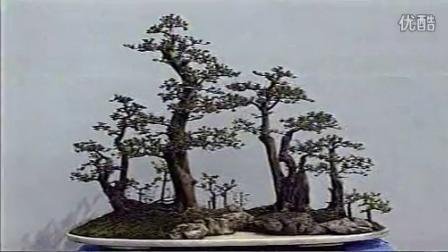 武汉绿林园艺邀您看千年古树——对节白蜡(盆景)