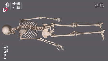 正能文化美术教学视频人体骨骼360度展示01