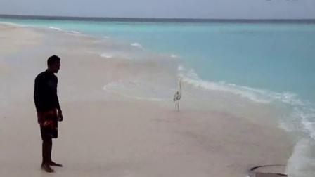 Scaevola-Travel——马尔代夫魔鬼鱼沙滩秀