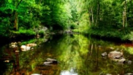 放松音乐 - 亚马逊热带雨林_标清