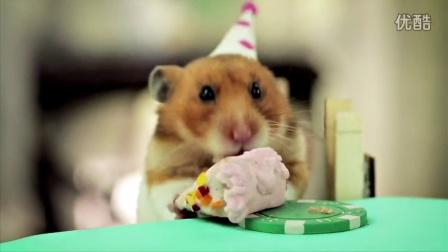 给刺猬的小小生日