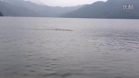 记录下,20140715花亭湖水库休闲自由泳