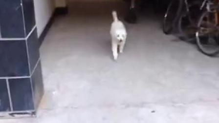 yufeixiaoyu的视频 2014-07-20 16:14