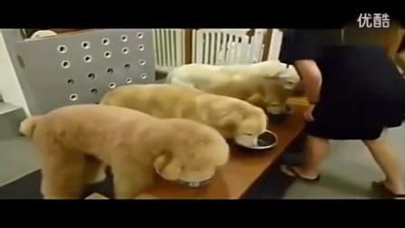 搞笑视频 笑死人-狗狗饭前祈祷_高清