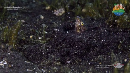 Critters of the Lembeh Strait 03 - 2014
