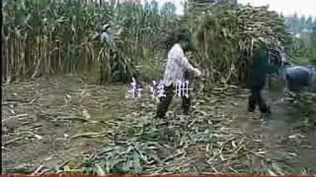 玉米秸秆青贮饲料的制作方法_标清201482002817