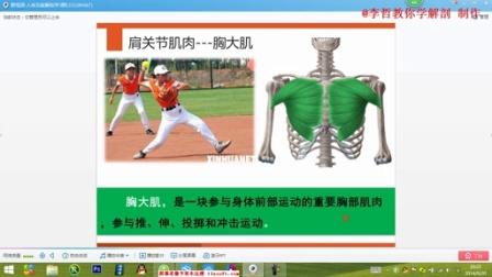 肩部肌肉的网课