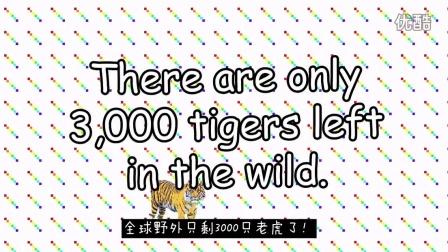 萌猫爱老虎