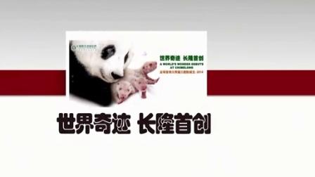 9月3日熊猫三胞胎直播