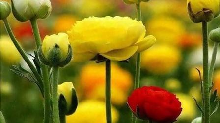 五彩缤纷的美丽花朵图片集