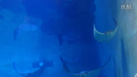 极地海洋世界之海底动物