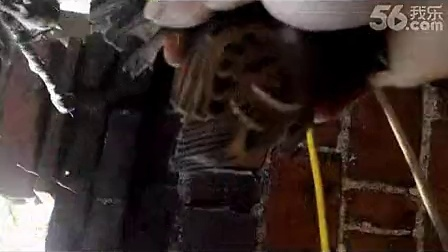 粘人都没问题胶水看看粘麻雀,制作粘胶的方法,很简单再看粘鸟胶想玩就玩