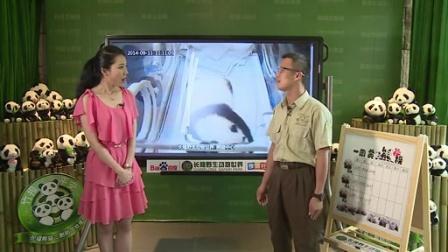 9月11日熊猫三胞胎直播