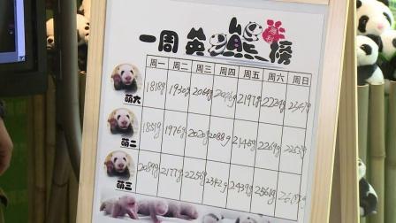 9月14日熊猫三胞胎直播