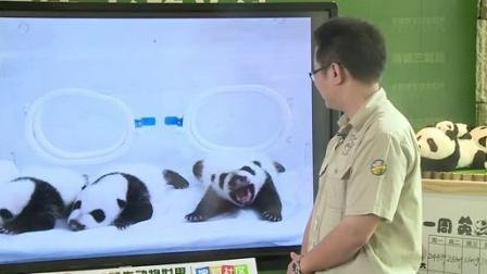 9月20日熊猫三胞胎直播
