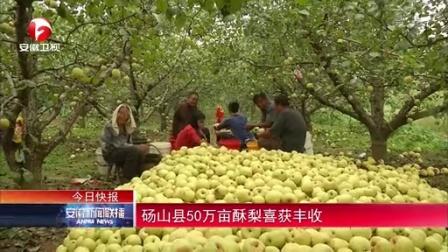 安徽新闻联播20140926砀山县50万亩酥梨喜获丰收 高清