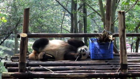 20140924成都熊猫基地成年别墅