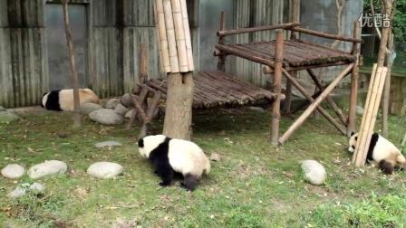 20140924成都熊猫基地幼年别墅