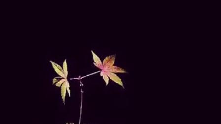 花到家的幸福说《秋语》手指艺术盆景