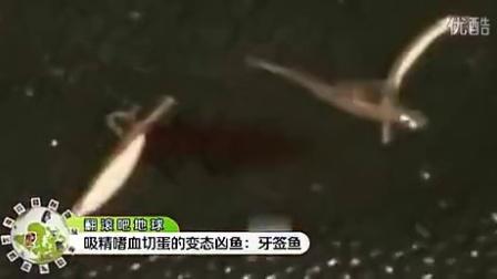 罕见奇观 - 奇葩鱼吸精嗜血切蛋 盘点变态凶鱼