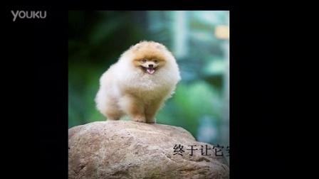 博美犬圣宠宠物店排行榜(www.petjm.com)