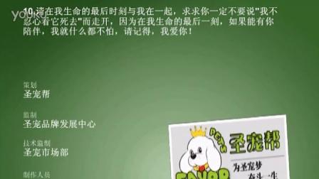 博美犬圣宠宠物连锁店(www.petjm.com)