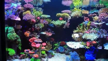 超赞的韩国海水缸