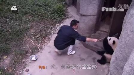 大熊猫的疯狂盆盆奶时间