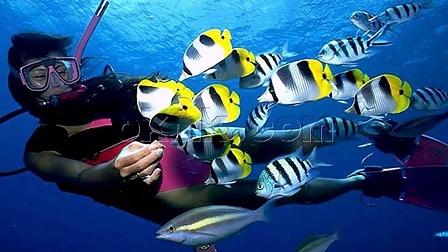 三亚亚龙湾海底世界旅游风景图片