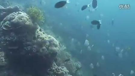 潜客诗巴丹岛潜水之旅。