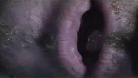 sUPEREDS hallOween video 2014