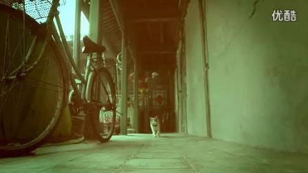 中国首支喵星人微电影:备胎猫的故事,笑屎了