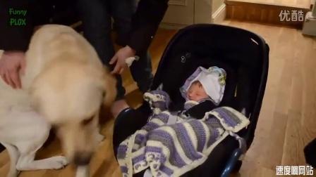 婴儿萌娃宝宝和狗狗 猫咪在一起的 温馨画面