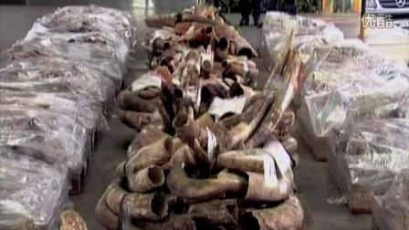 《狂野非洲》保护大象特别版预告片#不把象牙带回家#