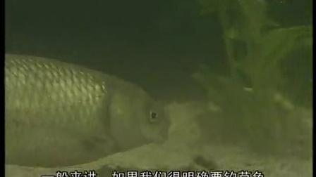 钓鱼视频鲫鱼鲤鱼如何调标