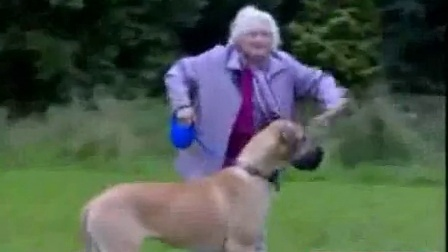Old Granny is pulled a mile by a Great Dane!
