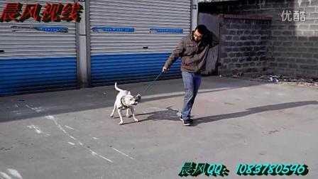 笑点:看完这视频你还敢穿鞋吗?【狗狗爱上鞋-搞笑来袭】