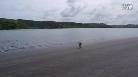 辛巴在新西兰的 RAGLAN BEACH