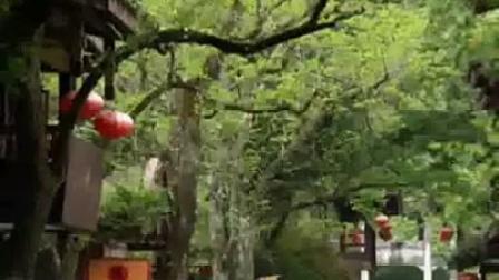 自驾游攻略:奇秀甲东南——武夷山