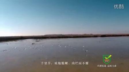 兵团十师北屯市千里羊(60s)