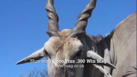 The Shooting Show - African Eland and the Armsan A612