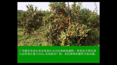 防好柑橘黄龙病做稳做强柑橘业!