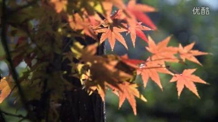 秋韵上海森林公园