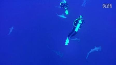 锤头鲨风暴
