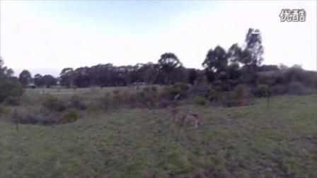 叫你偷拍!无人机被袋鼠被击落全过程-转载YT