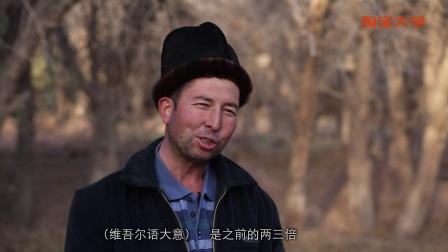 做有温度的新疆干果--中国首部涉农电商故事第3集