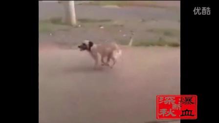 拼命也要陪你!奔跑吧…狗狗