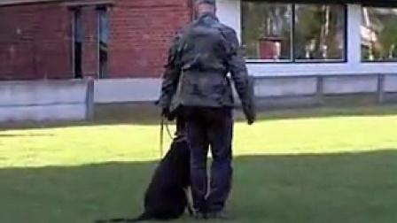 Yaspo 亚斯豹的防卫训练。15个月。