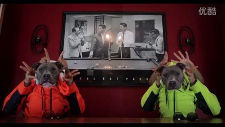 【粉红豹】你肯定没看过:两只狗居然会跳机械舞,手指舞~!